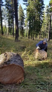rolling log rounds for firewood